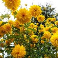 Мои цветы :: Виктор Елисеев
