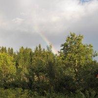 После дождя :: Виктор Елисеев