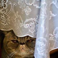 невеста :: Сергей Розанов