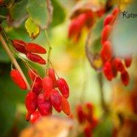 Осень. :: Катерина Шматова