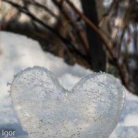 сердце :: игорь душкин