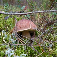 грибы :: Надя Попова