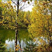 Листьев золото осень дарит. :: Любовь Чунарёва