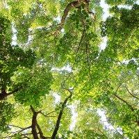 Просто листья :: Виктор Истомин