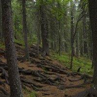 В сказочном лесу :: Анастасия Ульянова