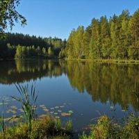 Лесное озеро :: максим лыков