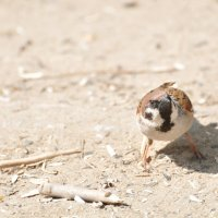 Angry Bird :: Дмитрий Финансов
