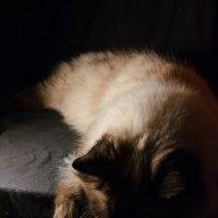 Кошачий сон :: Elena Agaeva