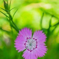 полевые цветы :: Александр Миллер