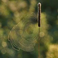 Осенний этюд :: Irina -