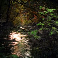 Осенние мелодии :: Денис Варава