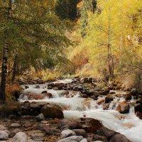 Осень в горах. :: Сергей Савич.
