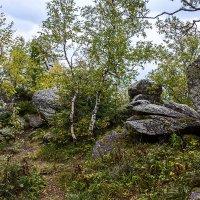 лесные тропинки :: Андрей Пашков