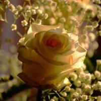 закатное солнышко в розочке :: Svetlana AS