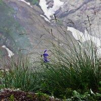 Там,в горах... :: Виолетта