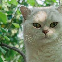 Котик :: Надежда Лаптева