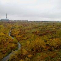 разноцветный ковёр тундры :: Светлана Козлова