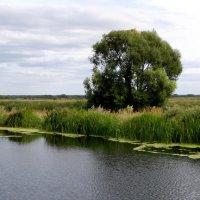 Пруд в Пощупове (панорама) :: Александр Буянов