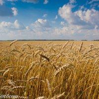 Урожайный год :: Светлана Медведева