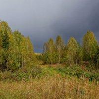 зарастающие дорожки :: gribushko грибушко Николай