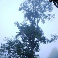 Утро туманное в Петровском :: Елена Павлова (Смолова)