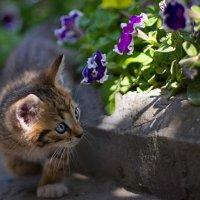 любопытство :: Евгения Персидская