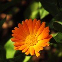 Аленький-цветочек! :: Emma Smit