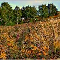 Сентябрь в лесу :: galina tihonova