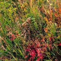 Травы-травы :: galina tihonova