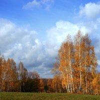 Березы желтою резьбой блестят в лазури голубой... :: Евгений Юрков