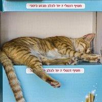 Свято место пусто не бывает!!!-из серии кошки очарование моё! :: Shmual Hava Retro