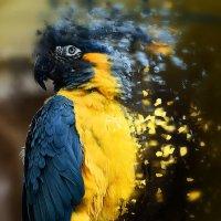 Попугайчик попугагай, ну всех тут распугай ! :: Дмитрий Утыра
