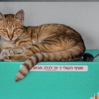 Свято место пусто не бывает3-из серии кошки очарование моё! :: Shmual Hava Retro