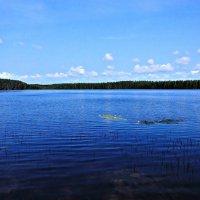 Озеро Приветное :: Полина