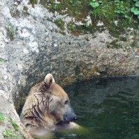 Медвежья фотосессия (Мишка на югах-2) Вид справа. :: Vladimir 070549