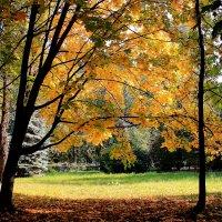 Осенний вальс :: Татьяна Ломтева