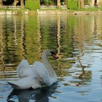 Лебедь :: Yuliya Sav
