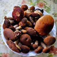 грибы :: Дмитрий Сажин