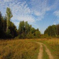 Когда иду я Подмосковьем IMG_0334 :: Андрей Лукьянов