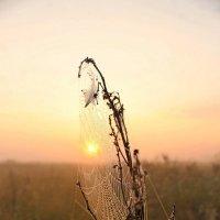 ....солнце встает... :: Александр Герасенков