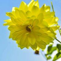 Цветы уходящего лета :: юрий Амосов