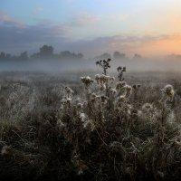 Сентябрьский рассвет...4. :: Андрей Войцехов