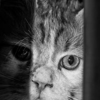 Взгляд из темноты :: Elena Ignatova