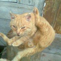 Кот йог.  Ассана  №2 :: Виктор Елисеев