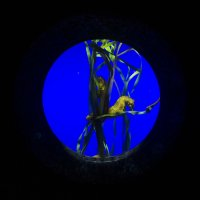 морские коньки :: Оксана Дольна