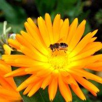 Пчелиный стол. Автор Натан. :: Фотогруппа Весна - Вера, Саша, Натан
