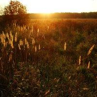 Закат в Абрамцеве DSC08715 :: Андрей Лукьянов