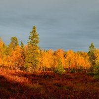 Осеннее солнце. :: Лариса Красноперова