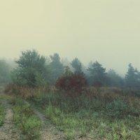 туман :: Анастасия Немова