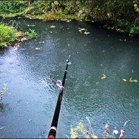 Ловись рыбка большая и маленькая :: Юлия Z